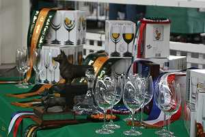 55th Champ Show - Trophy Table